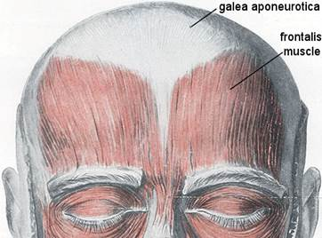 The Cause of Hair Loss